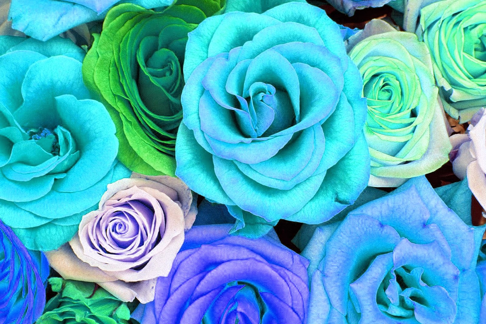 Watercolor Roses Wallpaper Freebies