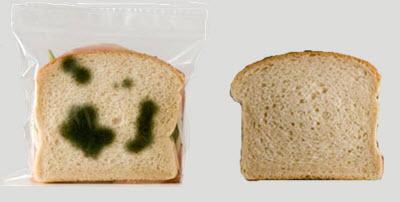 Pembusukan adalah proses perubahan benda yang berasal dari makhluk hidup karena adanya ak Teks Eksplanasi Percobaan Pembusukan Roti