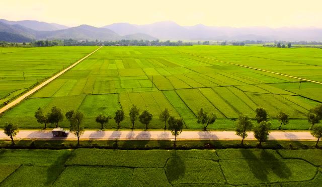 Cánh đồng Mường Thanh Điện Biên