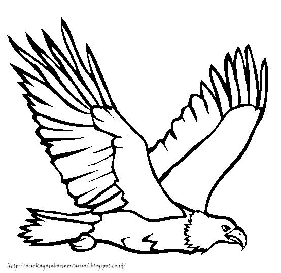 Gambar Mewarnai Burung Elang 1