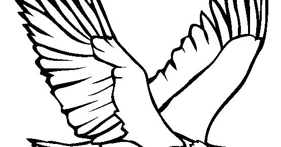 Download 107  Gambar Burung Elang Mewarnai HD Terbaru Free