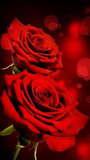 ورد احمر , صور باقة ورد حمراء , اجمل صور للورد الاحمر , خلفيات صور جميله ورد احمر