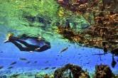 flutuação no Rio da Prata - Bonito