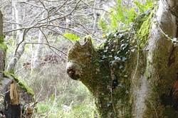 https://emanants.blogspot.com/2020/02/les-arbres-magiques-page-4.html