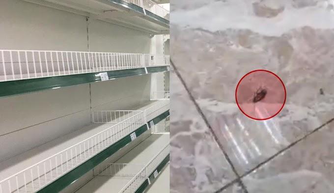 Las cucarachas de tiendas que operan en pesos convertibles pudieran estar muriendo de hambre debido a la escasez