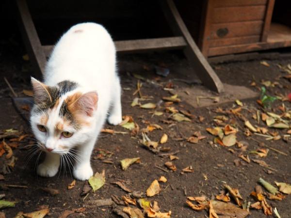 scaredy cat rescue