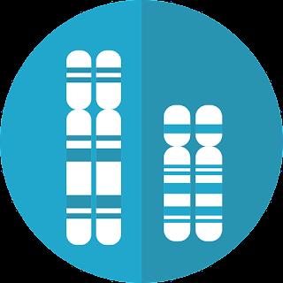 Perbedaan Kromosom Autosom dan Gonosom