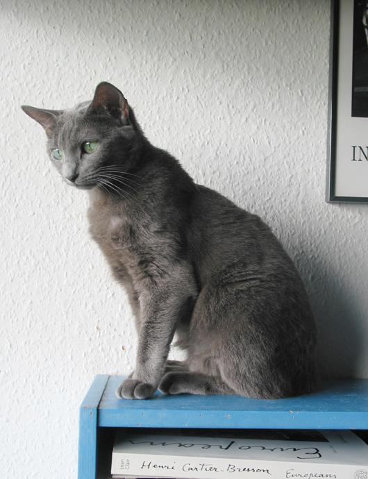 citater om katte Grib dagen: Citater om katte #42 citater om katte