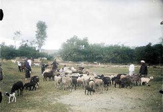 domba,-kambing-dan-beberapa-orang-suku-bangsa-batak