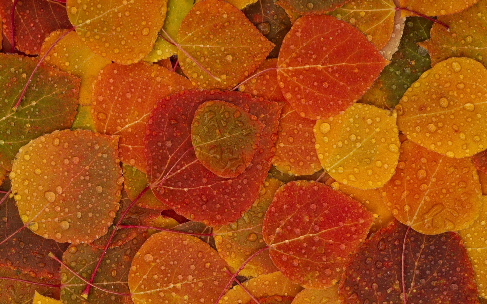 Free Desktop Wallpaper Autumn Leaves: Pemandangan: Autumn Leaves Wallpaper