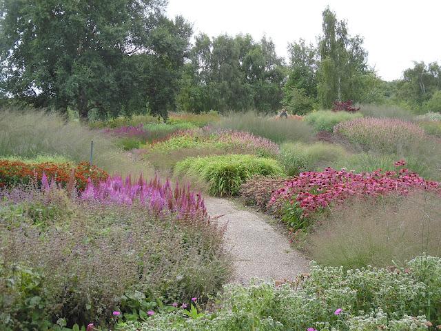 rabaty preriowe, trawy w ogrodzie