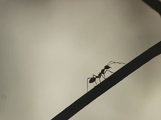 dream meaning of ants
