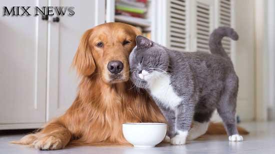 20 Ways To Be a Better Pet Parent