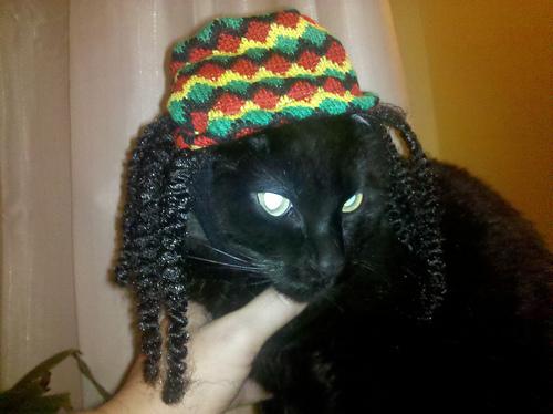 Hey Mon  it s Rasta Cat Rasta Cat