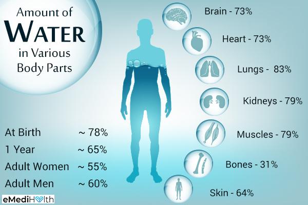 نسبة الماء في جسم الإنسان حسب الأعضاء