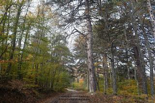 Το δάσος της Μηλιάς είναι ιδιοκτησία των κατοίκων της (Aπόφαση διοικητικού δικαστηρίου του υπουργείου Γεωργίας)