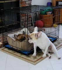 confinamento de cães