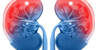 How Kidneys are important for our body..
