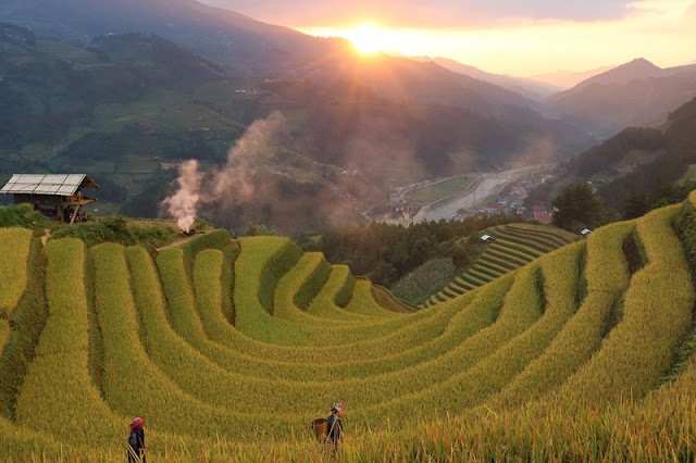 Mu Cang Chai beautiful surprise in the middle of the golden season to hold all visitors 2