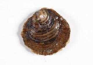 ostras, ricas en zinc