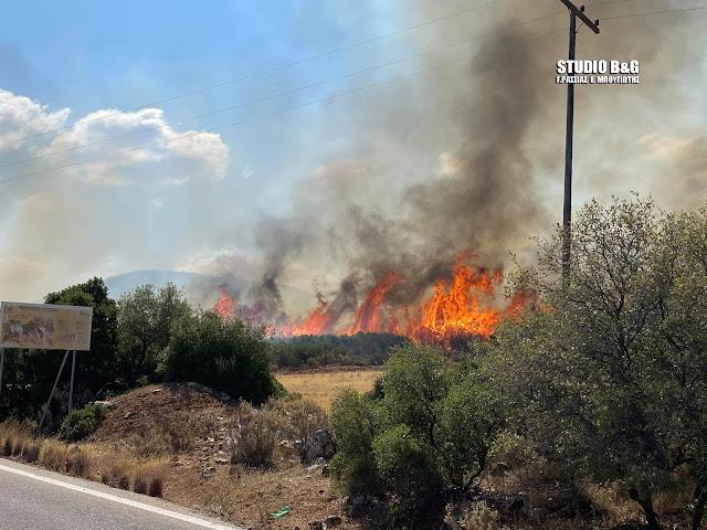Διήμερος κίνδυνος πυρκαγιών και για την Αργολίδα