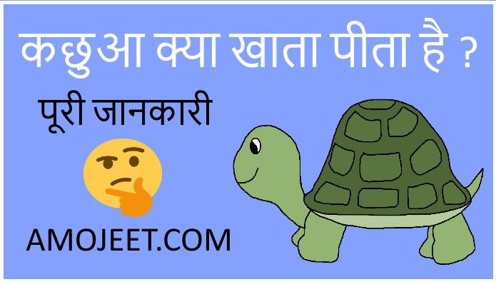 turtle-Tortoises-kya-khata-hai
