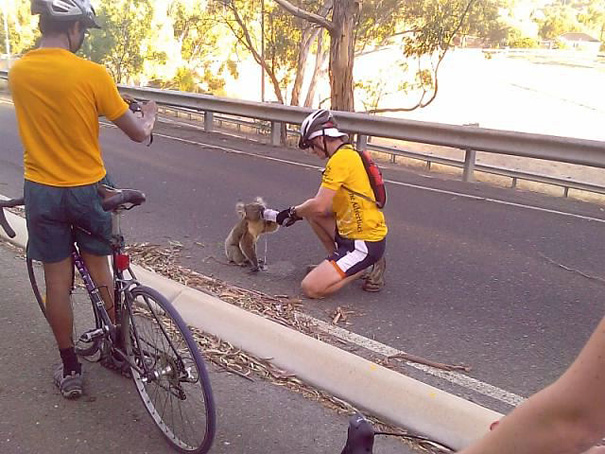 These bikers decided to stop and offer this thirsty koala a much-needed drink of water.
