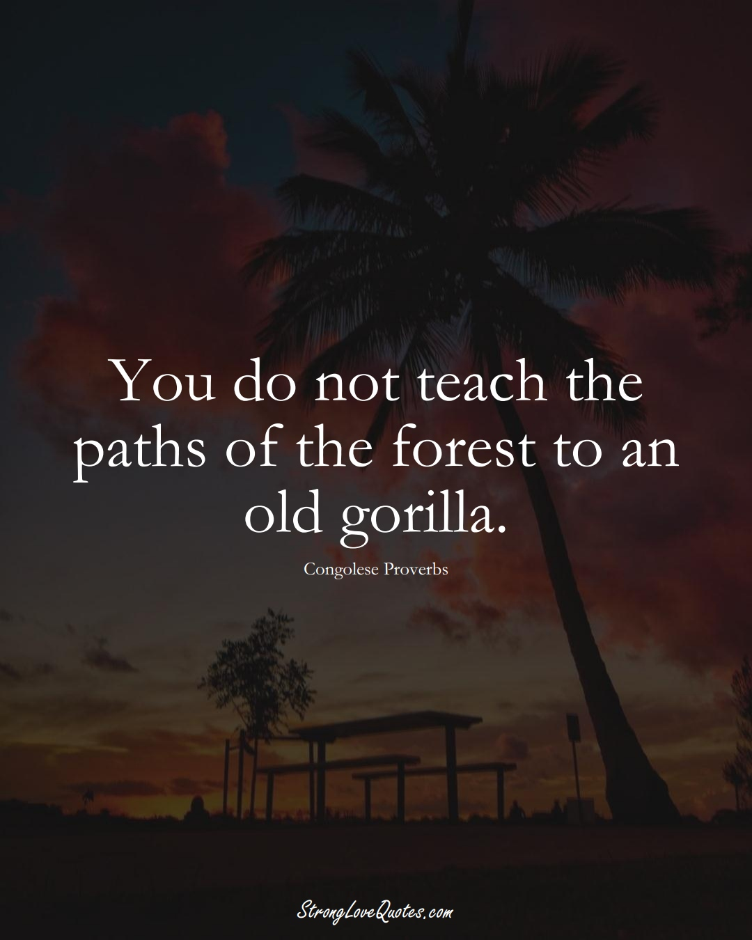 You do not teach the paths of the forest to an old gorilla. (Congolese Sayings);  #AfricanSayings