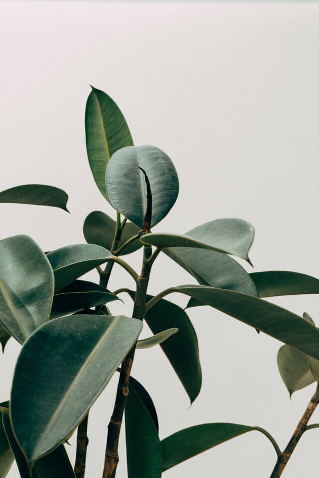 Green Leafed Indoor Plant HD Copyright Free Image