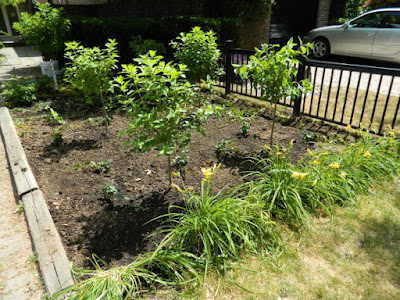 Mount Pleasant West front garden renovation after by Paul Jung Gardening Services Toronto