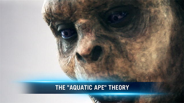 aquatic ape hypothesis The aquatic ape theory suggests that at some point in the evolutionary chain   an aquatic environment offers an alternative hypothesis for certain features that.