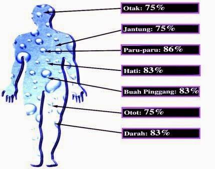 20 Manfaat dan Khasiat Air Putih bagi Tubuh Manusia