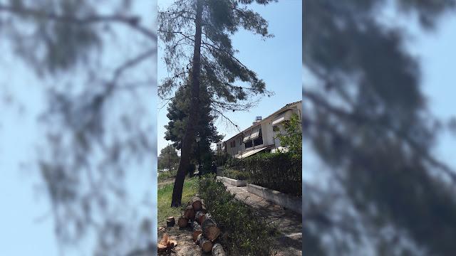 Κάτοικοι των Εργατικών Κατοικιών στο Ναύπλιο ευχαριστούν τον Δήμο για την κοπή δέντρων