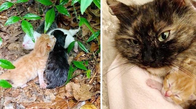 Бродячая кошка укрывает котят своим телом от проливного дождя, пока спасатели прибывают