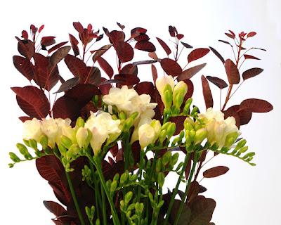 cotinus bouquet  freesia
