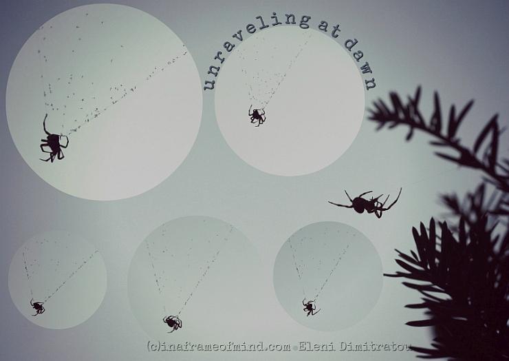 unraveling spider webs