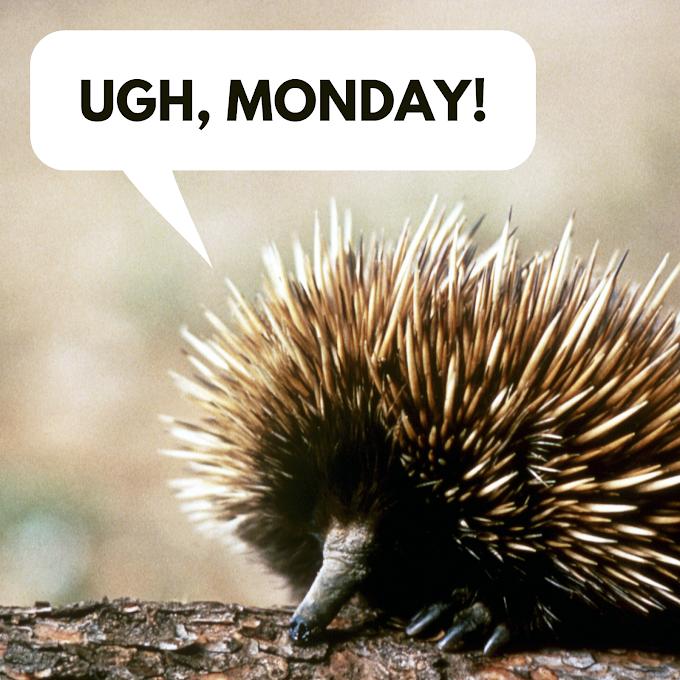 Ada Apa Dengan Hari Senin