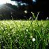 Chùm thơ: Giọt sương mai và Ta vẫn đợi chờ con