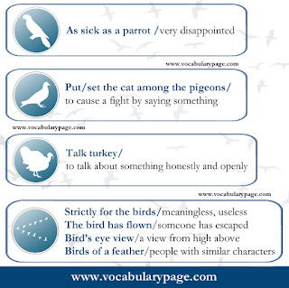 Idioms with birds
