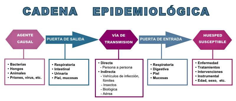 Tipos de enfermedades contagiosas en el ser humano