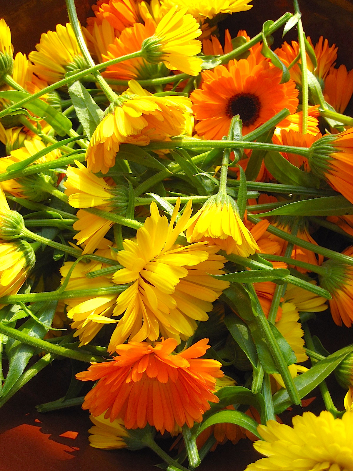 Blumen Im September claudia s seite blumen september 2008