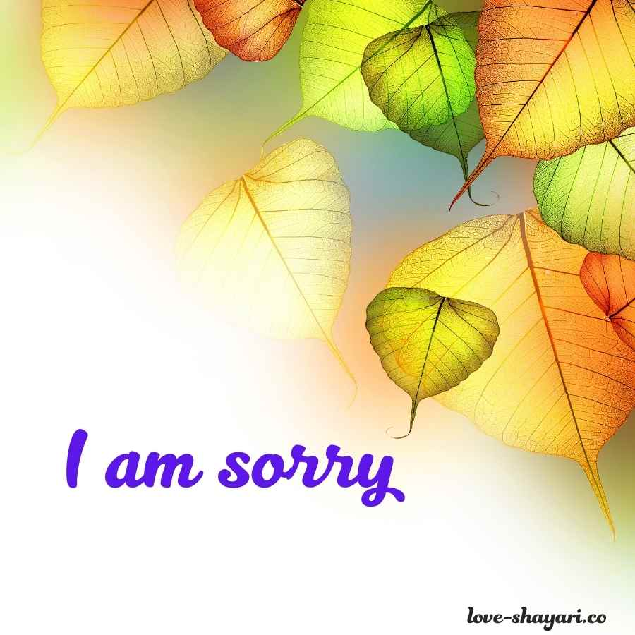pics of sorry for lover