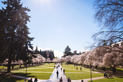 Image result for Happy Spring in Seattle