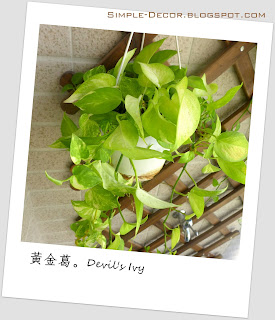 http://simple-decor.blogspot.tw/2016/02/greeny-garden-devils-ivy.html
