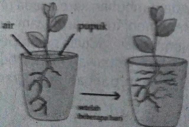 Sistem dan jenis gerak pada tumbuhan