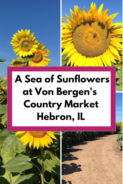 Nature Is Golden Walking Through a Sea of Sunflowers at Von Bergen's Country Market
