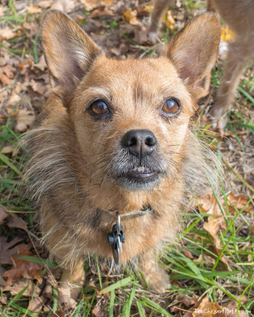 How to find a lost dog, post on lost dog websites
