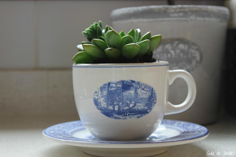 Suculenta plantada en una taza