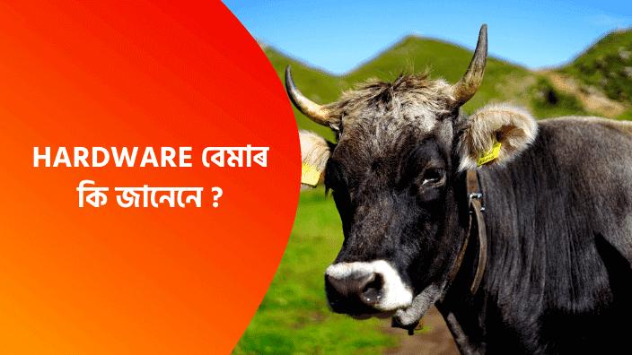 Hardware disease In Assamese | New Assamese Disease In Cow
