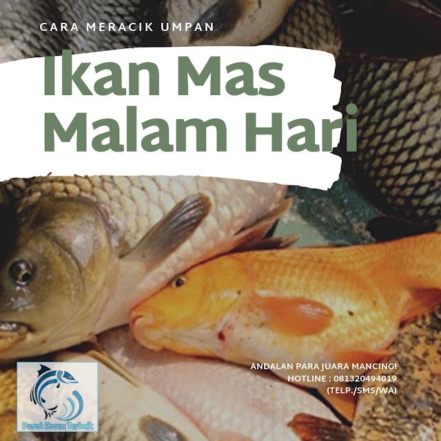 https://pusatessenterbaik.blogspot.com/2019/06/cara-meracik-umpan-ikan-mas-malam-hari-anti-boncos.html